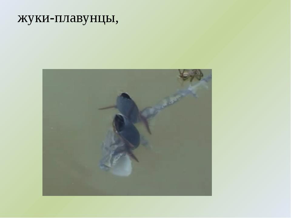 жуки-плавунцы,
