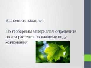 Выполните задание : По гербарным материалам определите по два растения по каж