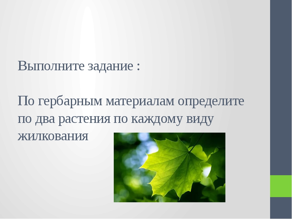Выполните задание : По гербарным материалам определите по два растения по каж...