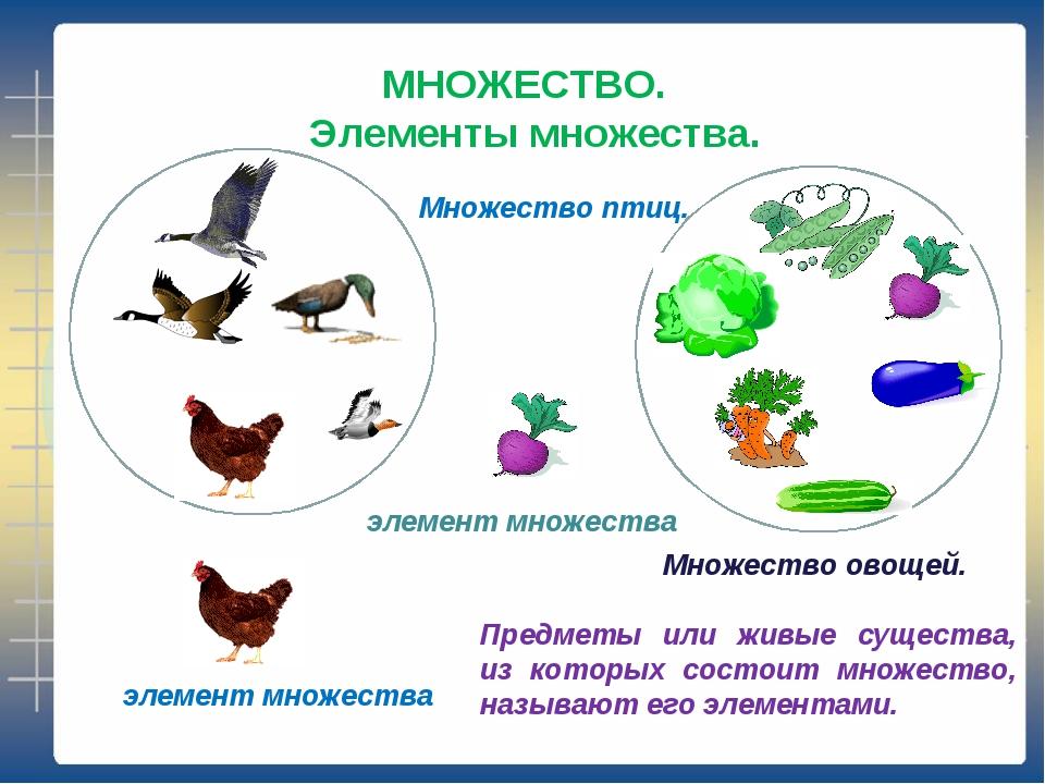 МНОЖЕСТВО. Элементы множества. Множество птиц. элемент множества Множество ов...