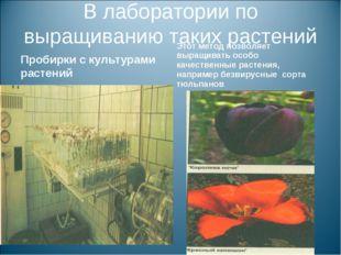 В лаборатории по выращиванию таких растений Пробирки с культурами растений Эт