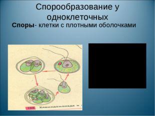Спорообразование у одноклеточных Споры- клетки с плотными оболочками