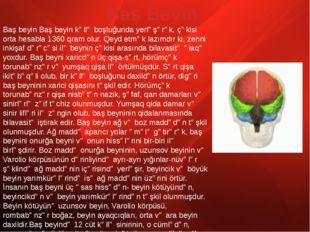 Baş beyin Baş beyin kəllə boşluğunda yerləşərək, çəkisi orta hesabla 1360 qra