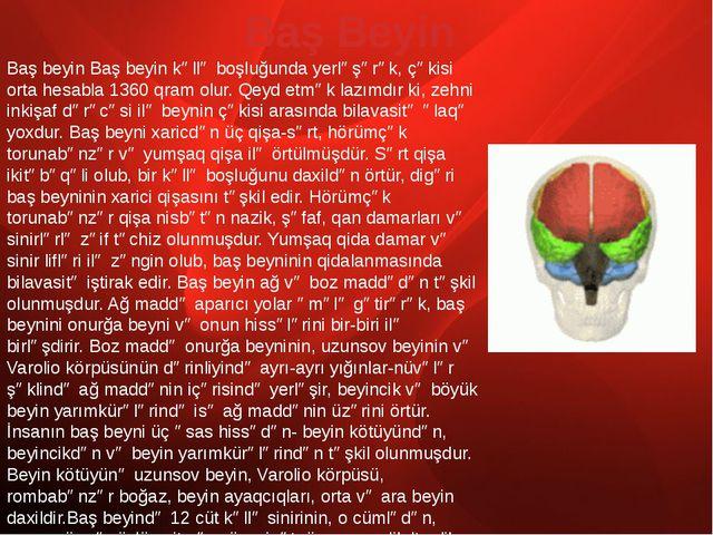 Baş beyin Baş beyin kəllə boşluğunda yerləşərək, çəkisi orta hesabla 1360 qra...