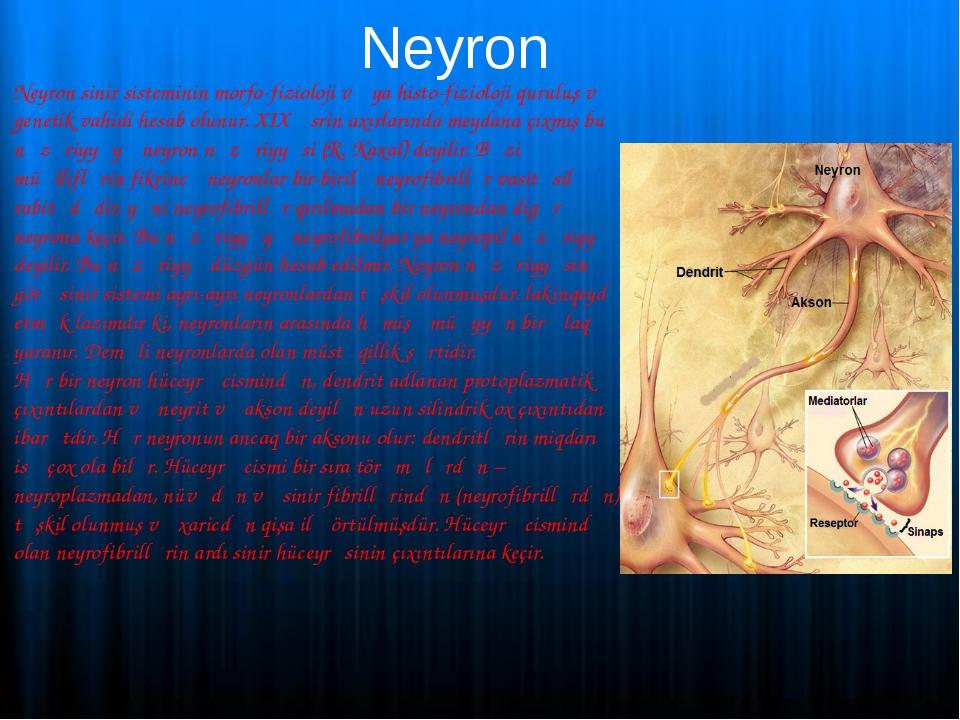 Neyron Neyron sinir sisteminin morfo-fizioloji və ya histo-fizioloji quruluş...