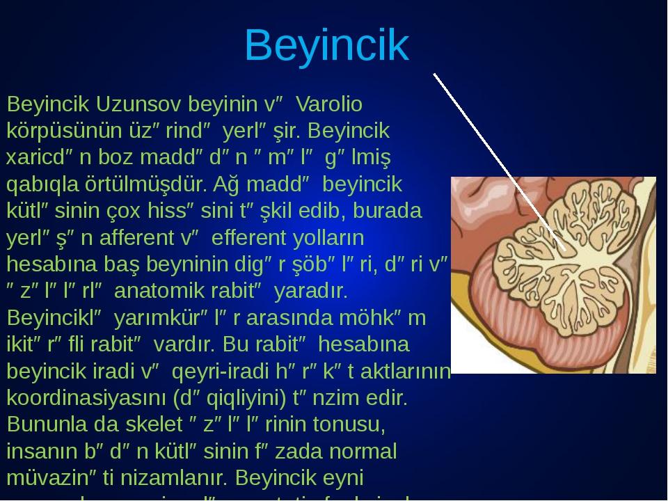 Beyincik Beyincik Uzunsov beyinin və Varolio körpüsünün üzərində yerləşir. Be...