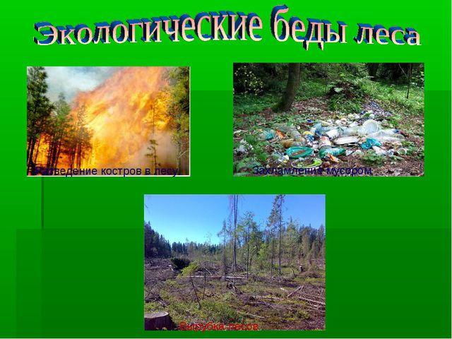 Разведение костров в лесу. Захламление мусором Вырубка лесов