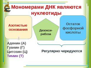 Мономерами ДНК являются нуклеотиды Азотистые основания Остаток фосфорной кисл