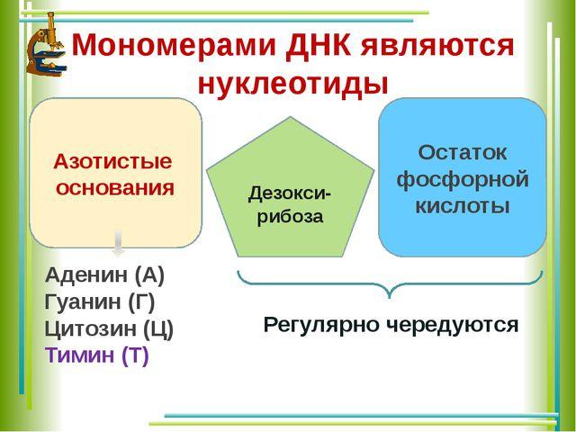 Мономерами ДНК являются нуклеотиды Азотистые основания Остаток фосфорной кисл...