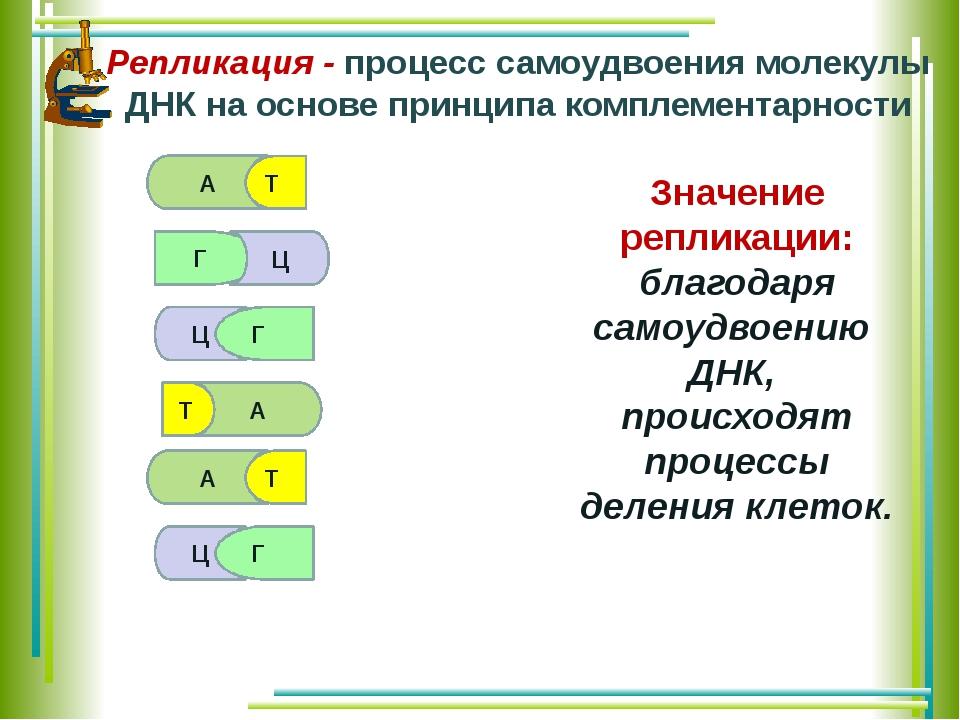 А Т Г Ц Г Т А Ц А Т Ц Г Репликация - процесс самоудвоения молекулы ДНК на осн...