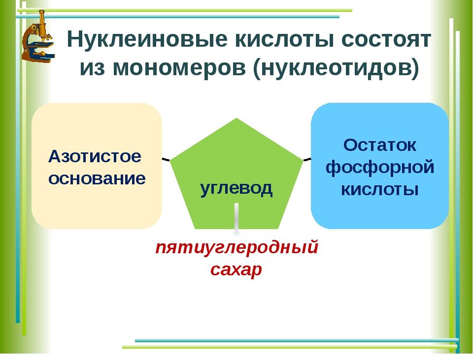 Азотистое основание углевод Остаток фосфорной кислоты Нуклеиновые кислоты сос...