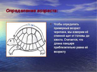 Определение возраста: Чтобы определить примерный возраст черепахи, мы измерим