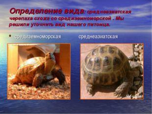 Определение вида: среднеазиатская черепаха схожа со средиземноморской . Мы ре