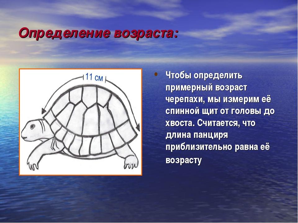 Определение возраста: Чтобы определить примерный возраст черепахи, мы измерим...