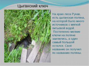 Цыганский ключ На краю леса Рукав, есть цыганская поляна, на которой было мно