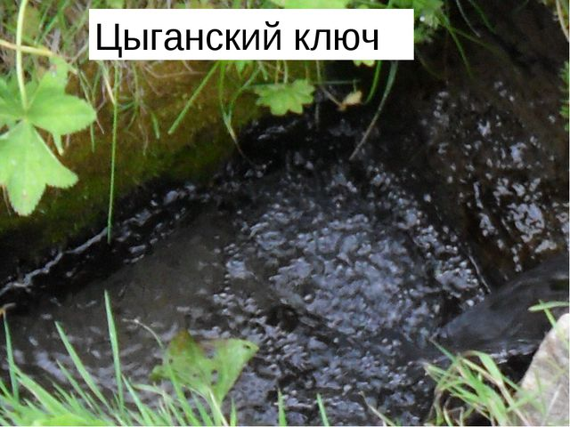 На краю леса Рукав, что рядом с с. Крутец, есть поляна, на которой было много...