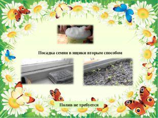 Посадка семян в ящики вторым способом Полив не требуется