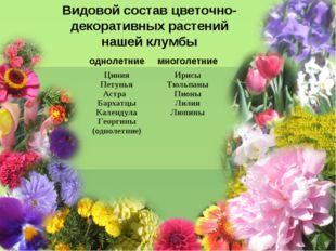 Видовой состав цветочно-декоративных растений нашей клумбы однолетниемноголе