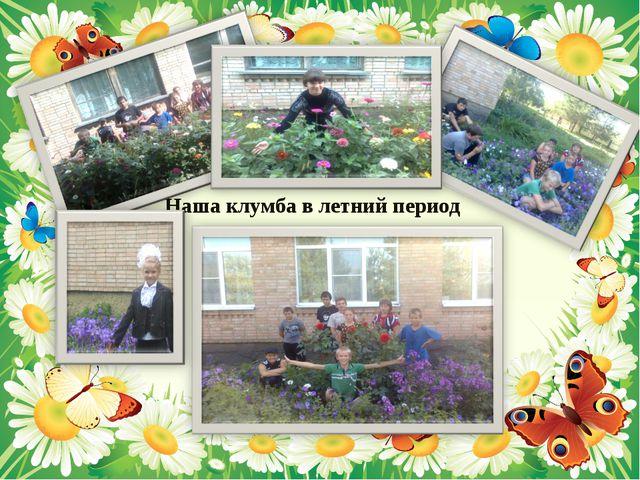 Наша клумба в летний период