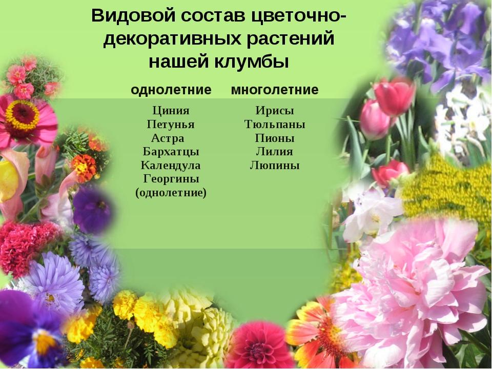 Видовой состав цветочно-декоративных растений нашей клумбы однолетниемноголе...