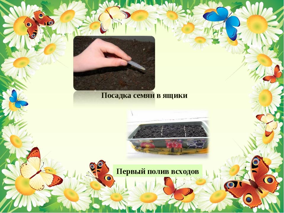 Посадка семян в ящики Первый полив всходов