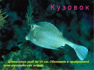 Длина этих рыб до 50 см. Обитают в прибрежной зоне тропических морей.