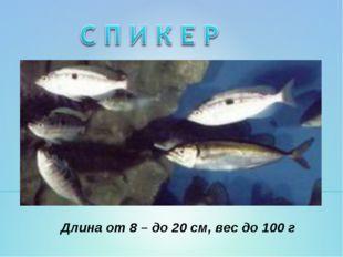 Длина от 8 – до 20 см, вес до 100 г