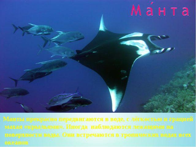 Манты прекрасно передвигаются в воде, с лёгкостью и грацией махая «крыльями»....