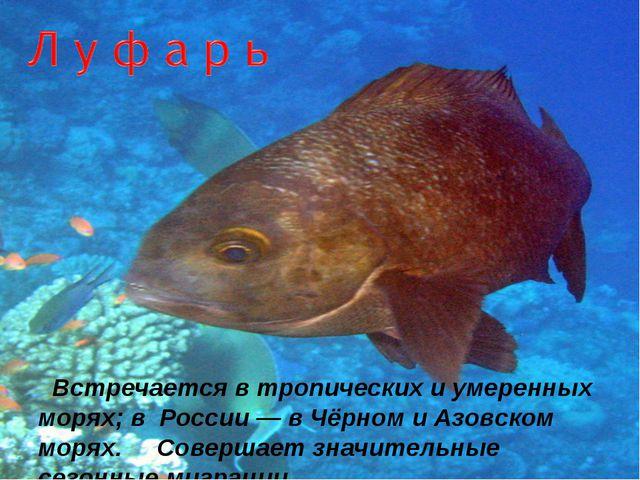 Встречается в тропических и умеренных морях; в России — в Чёрном и Азовском...