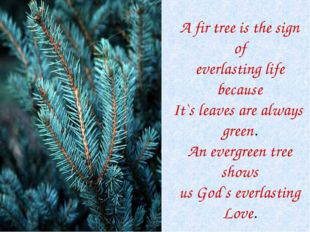 A fir tree is the sign of everlasting life because It`s leaves are always gre