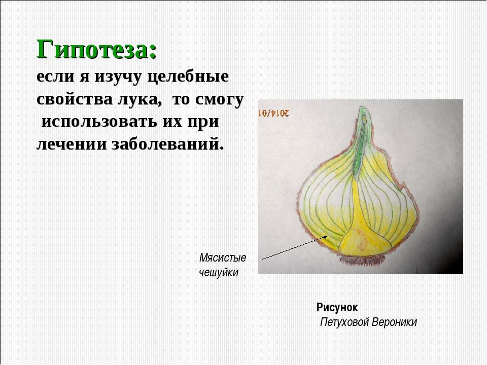 Гипотеза: если я изучу целебные свойства лука, то смогу использовать их при л...