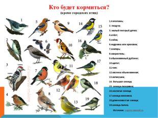 Кто будет кормиться? (кроме городских птиц) 1.поползень; 2. пищуха; 3. малый