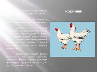 Корниши Корниши различаются по окраске оперения — красные, белые и палевые. Н
