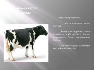 Черно-пестрая порода Черно-пестрая порода. Масть животных черно-пестрая. Жива