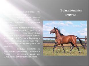 Тракененская порода Тракененская порода - это верхово - упряжная порода. Типи