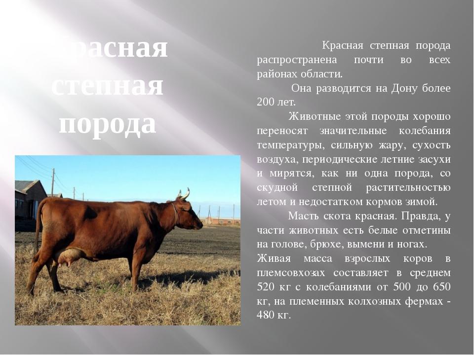 Красная степная порода Красная степная порода распространена почти во всех ра...