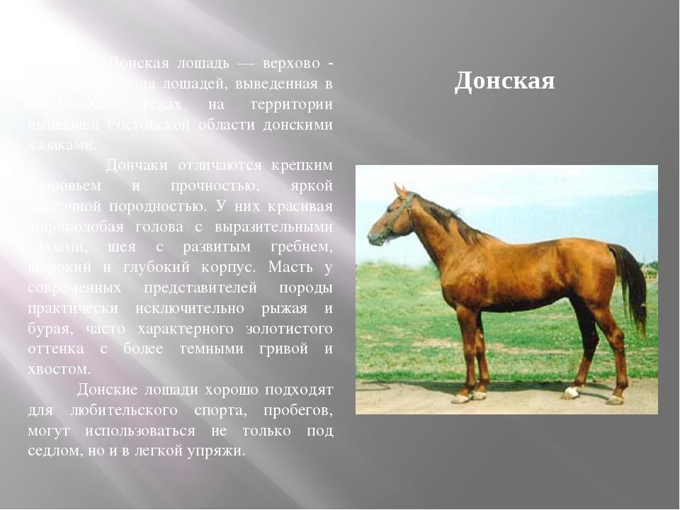 Донская Донская лошадь — верхово - упряжная порода лошадей, выведенная в XVII...