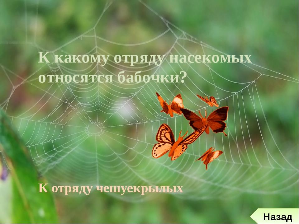 Презентация на тему:  к каким отрядам относятся эти насекомые?