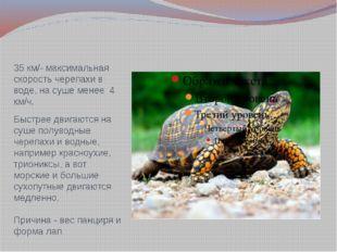 35 км/- максимальная скорость черепахи в воде, на суше менее 4 км/ч. Быстрее