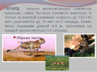 ГЕПАРД - хищное млекопитающее семейства кошачьих, самое быстрое наземное живо