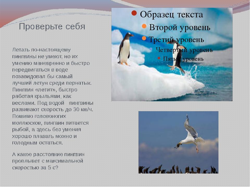 Проверьте себя Летать по-настоящему пингвины не умеют, но их умению маневренн...