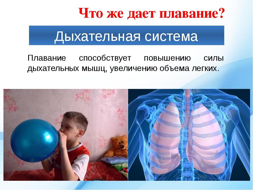 Дыхательная система Плавание способствует повышению силы дыхательных мышц, ув...