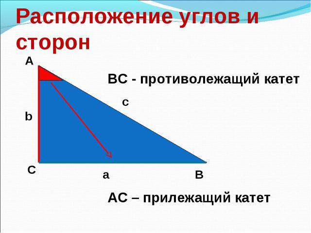 Расположение углов и сторон А С В b c a ВС - противолежащий катет АС – прилеж...