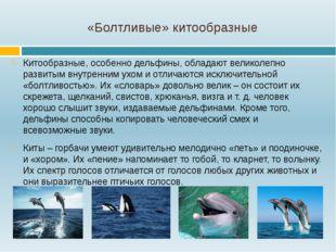 «Болтливые» китообразные Китообразные, особенно дельфины, обладают великолепн