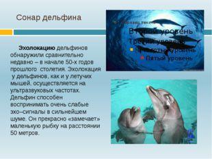 Сонар дельфина Эхолокацию дельфинов обнаружили сравнительно недавно – в начал