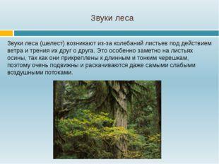 Звуки леса Звуки леса (шелест) возникают из-за колебаний листьев под действие