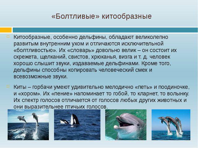 «Болтливые» китообразные Китообразные, особенно дельфины, обладают великолепн...