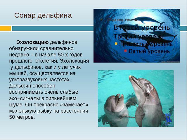 Сонар дельфина Эхолокацию дельфинов обнаружили сравнительно недавно – в начал...
