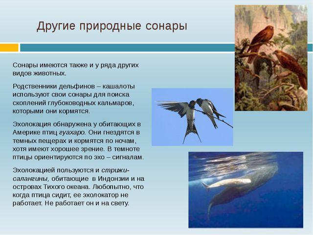 Другие природные сонары Сонары имеются также и у ряда других видов животных....