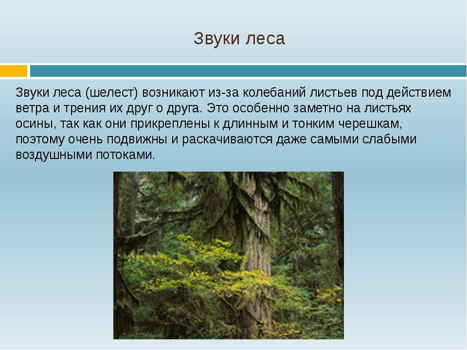 Звуки леса Звуки леса (шелест) возникают из-за колебаний листьев под действие...